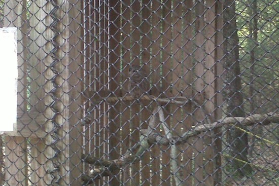 the barred owl at ssnsc