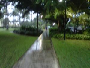 tropical storm at UM