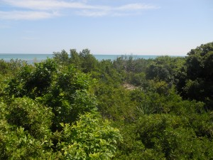 overlooking Indian Key