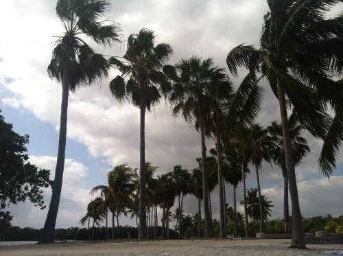 Matheson Palms