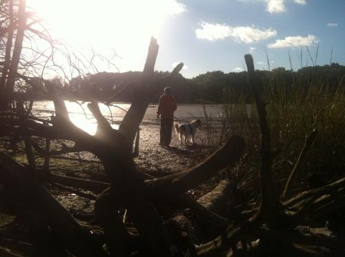 World's End driftwood