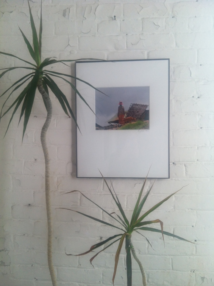 FP palms